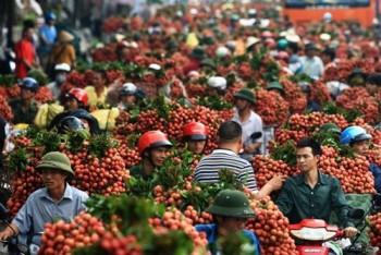 Trung Quốc 'chuẩn bị giúp' hành trang cho Việt Nam vào TPP?