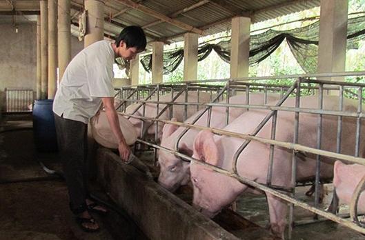 EU áp quy định mới về thực phẩm từ động vật