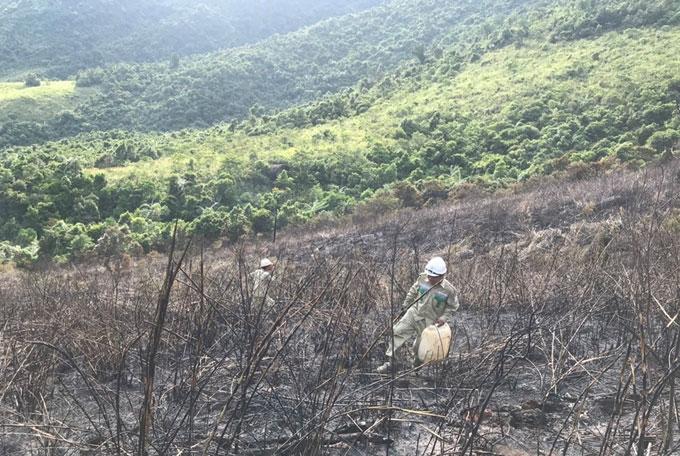 Ngăn ngừa sự cố do cháy rừng