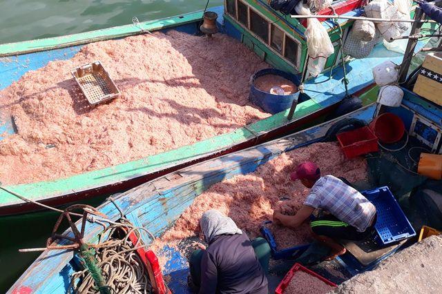 """Ngư dân Bình Định trúng lớn """"lộc biển"""", kiếm tiền triệu chỉ vài giờ"""