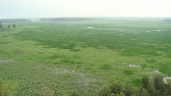 Chấp thuận chuyển mục đích sử dụng đất tại tỉnh Đồng Tháp