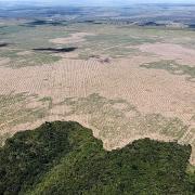Rừng Amazon đang bị tàn phá ở mức cao chưa từng có