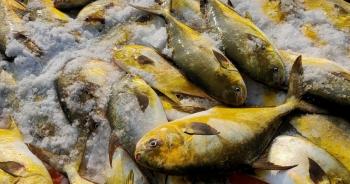 """Trúng """"mẻ vàng"""" cuối năm, mỗi ngư dân thu hơn 40 triệu đồng sau một đêm"""