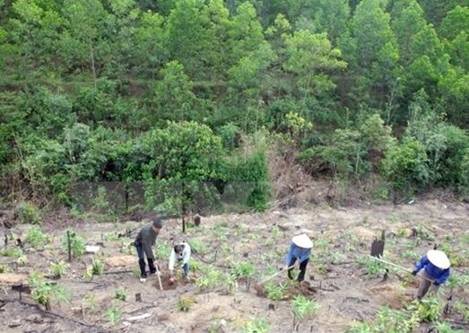 Việt Nam đặt mục tiêu 5 năm trồng 1 tỷ cây xanh