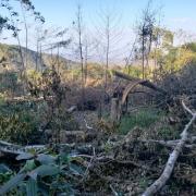 10 năm, hơn 22.000 ha rừng tại 4 lâm trường bị tàn phá