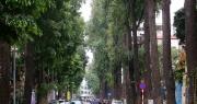 Những hàng cây xanh được quy hoạch hơn 100 năm trước ở Hà Nội giờ ra sao?