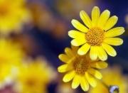 Tử vi ngày 5/5/2021: Tuổi Mão tài lộc đến nhà, tuổi Dậu đào hoa cực vượng