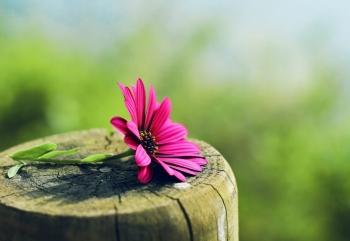 Tử vi ngày 14/4/2021: Tuổi Dần tươi sáng cuối đường, tuổi Tuất cẩn trọng tiền bạc