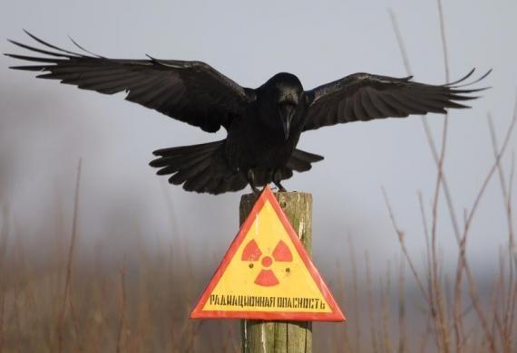 nhung buc anh hiem ve chernobyl hom nay