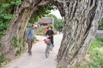 """Cây đa 500 tuổi có bộ rễ khủng tạo thành cổng làng """"độc"""" nhất ở Hưng Yên"""