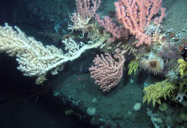 Phát hiện 12 loài mới ở dưới lòng biển Đại Tây Dương