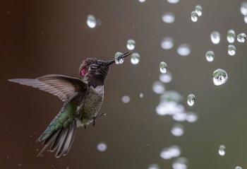 10 buc anh tuyet dep ve loai chim dat giai thuong audubon