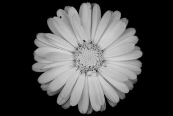 Hoa chuyển màu để thích nghi với biến đổi khí hậu
