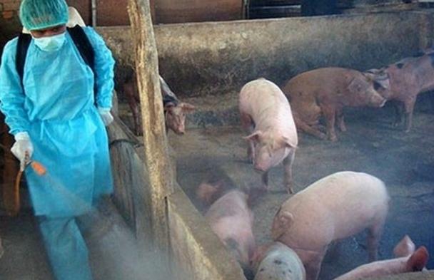 Hà Nội triển khai phương án phòng bệnh Dịch tả lợn châu Phi