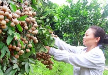 doanh nghiep xuat khau nong san viet tim duong sang hoa ky