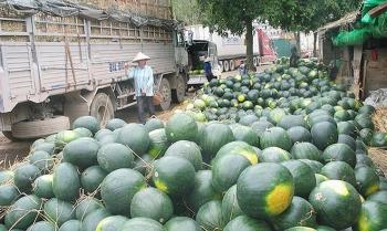 doanh nghiep logistics giam 10 20 phi luu kho cho nong san